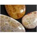 Pendentifs en corail fosile